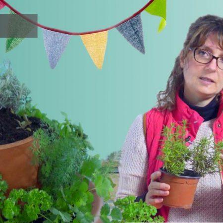 Taller de creación de una espiral de plantas aromáticas